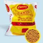canro-il-vincente-canary