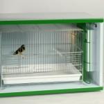 camera-calda-cc05-per-uccelli-e-pappagalli