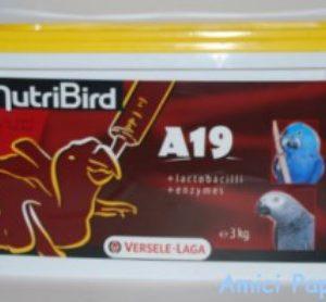 nutribird a21 versele laga pappa per imbecco pappagalli piccoli da allevare a mano